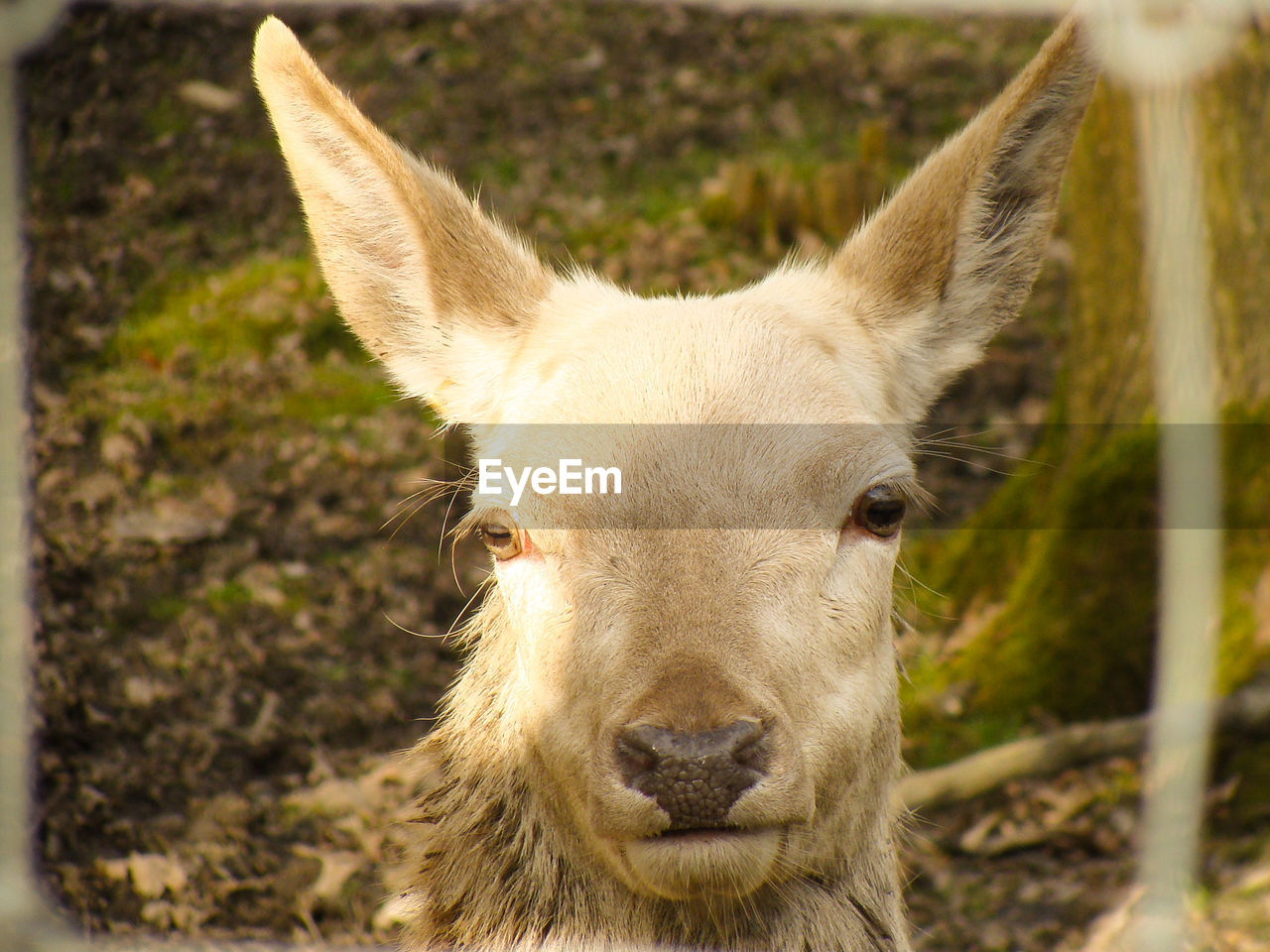 one animal, animal themes, domestic animals, close-up, day, mammal, no people, portrait, focus on foreground, outdoors, looking at camera, nature