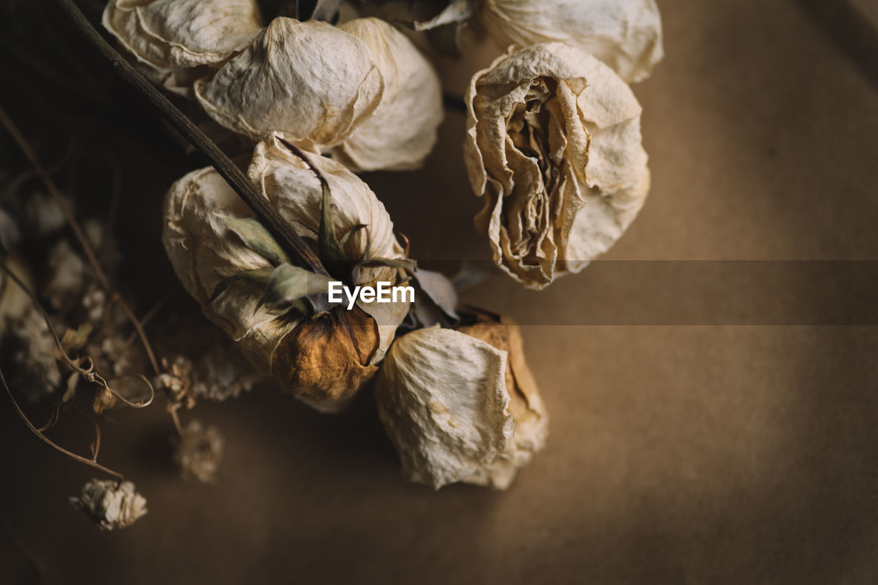 Dried roses on a brown background