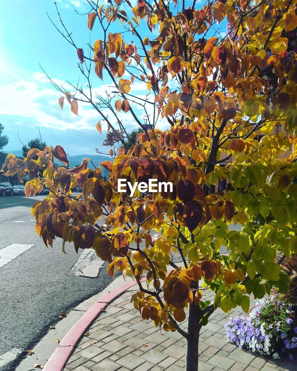 nature, day, outdoors, growth, beauty in nature, tree, no people, leaf, autumn, sky, yellow, freshness, flower, branch, fragility, close-up