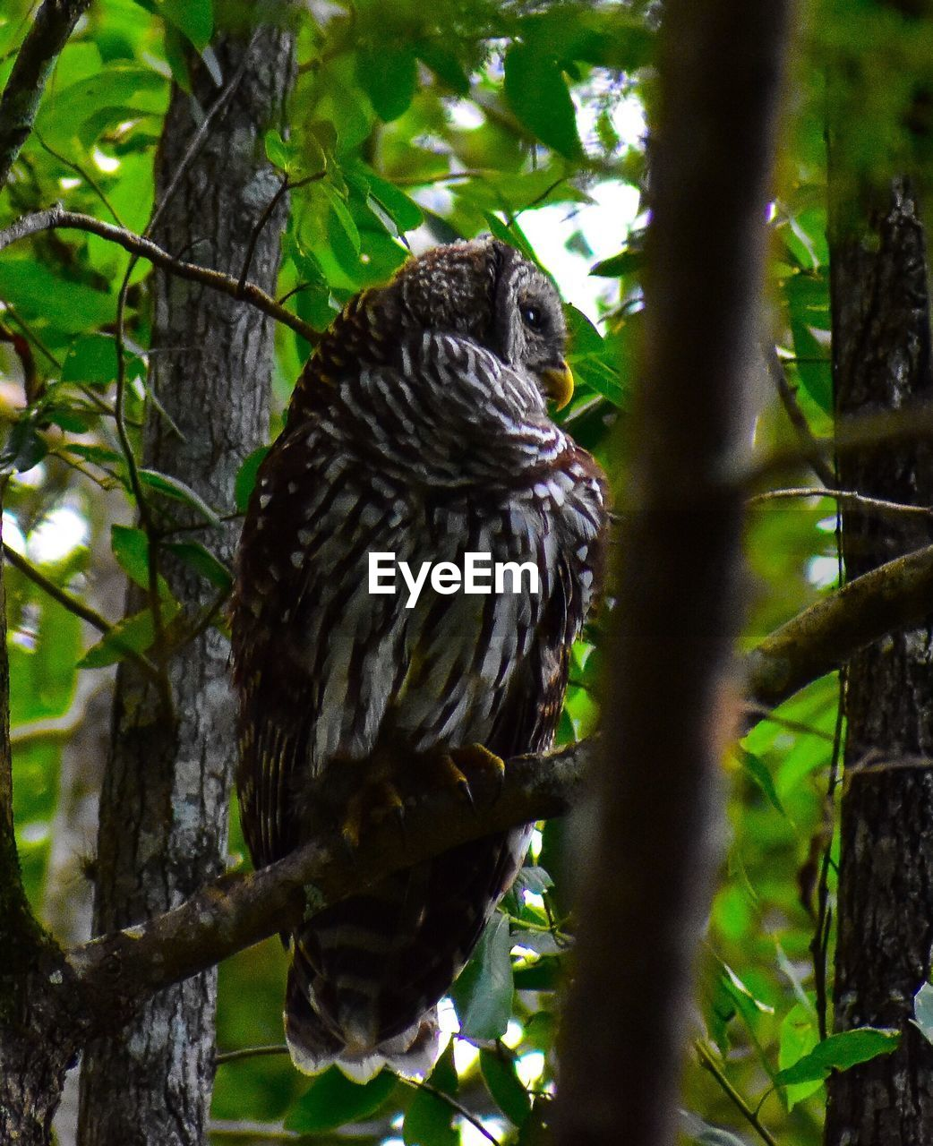 animal, animal themes, animal wildlife, bird, animals in the wild, one animal, tree, vertebrate, plant, branch, perching, nature, day, no people, bird of prey, focus on foreground, outdoors, low angle view, forest, owl, eagle