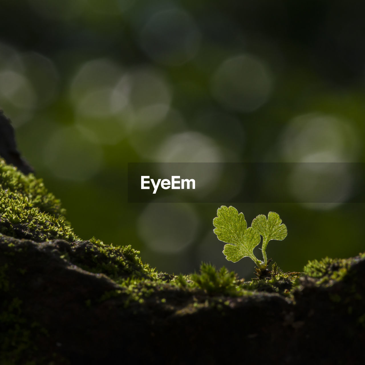 growth, plant, green color, selective focus, nature, beauty in nature, close-up, leaf, plant part, no people, day, outdoors, freshness, field, land, tranquility, moss, beginnings, focus on foreground, food