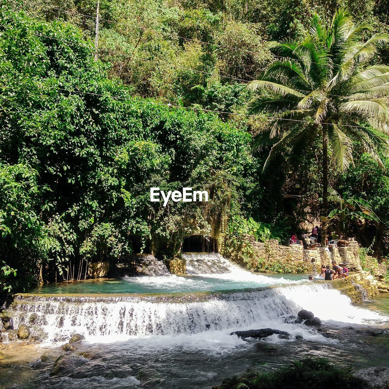 tree, water, nature, growth, beauty in nature, waterfall, scenics, motion, day, outdoors, no people, green color, tranquil scene, tranquility, plant, palm tree, forest, sky