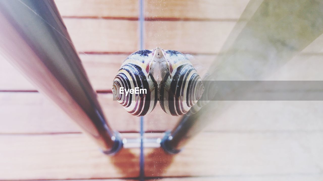 High Angle View Of Snail On Mirror