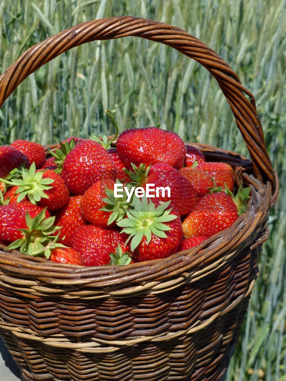 basket, container, red, food, fruit, food and drink, healthy eating, freshness, strawberry, wellbeing, wicker, no people, close-up, berry fruit, focus on foreground, plant, nature, field, day, agriculture, ripe