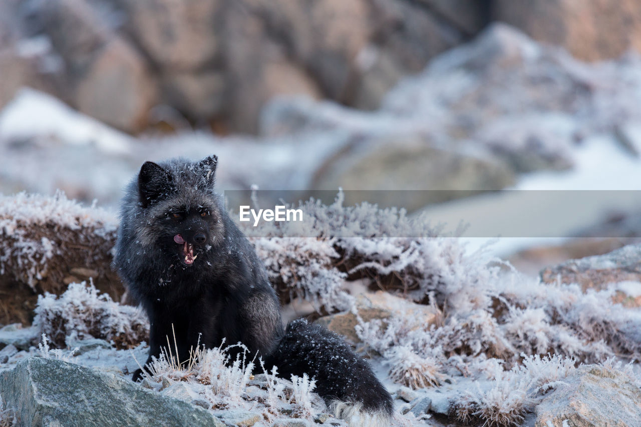 VIEW OF AN ANIMAL ON SNOW