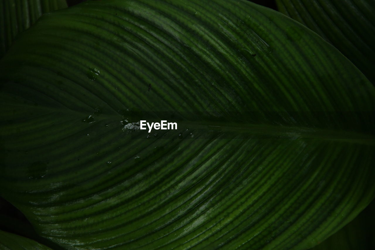 green color, close-up, freshness, leaf, growth, plant, beauty in nature, plant part, no people, full frame, nature, drop, water, natural pattern, wet, pattern, backgrounds, selective focus, food and drink, outdoors, leaves, purity, raindrop, palm leaf, dew
