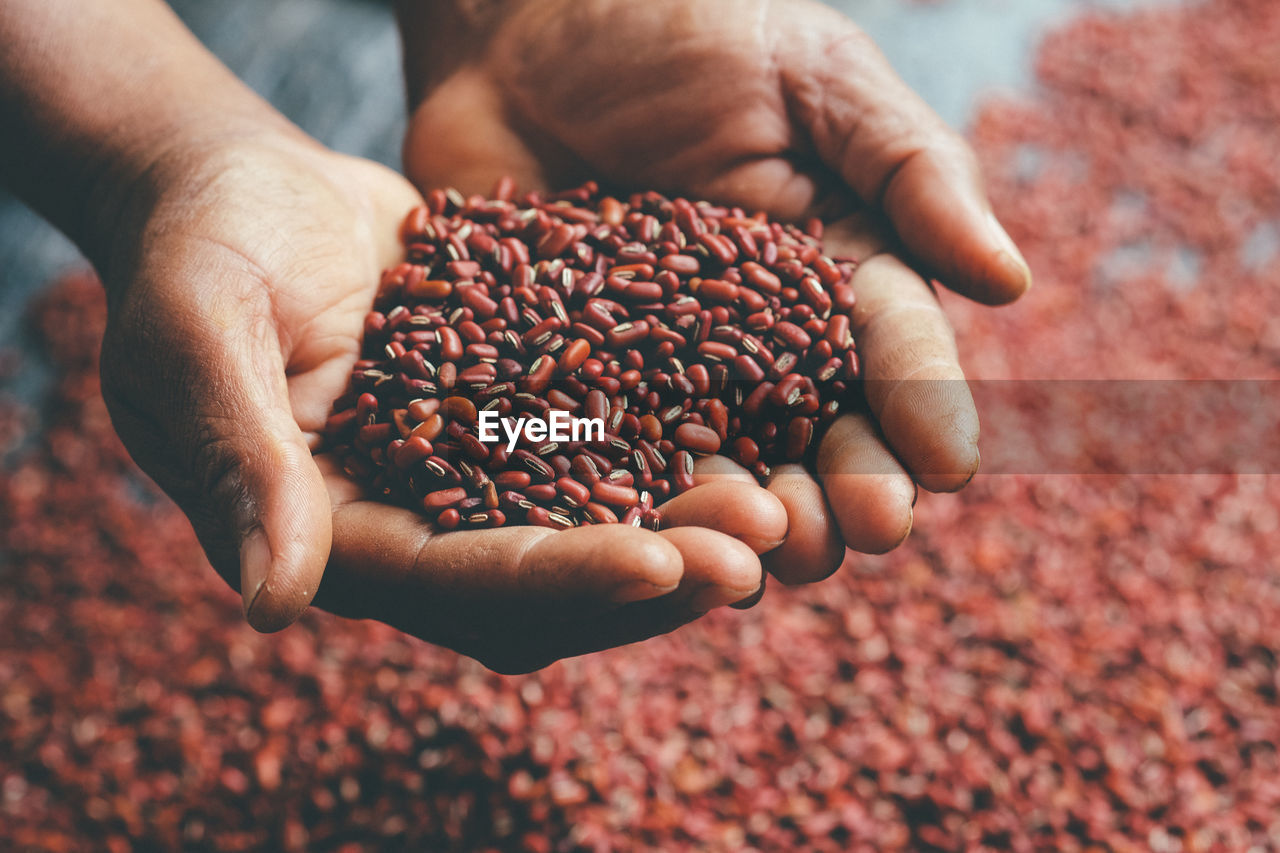 Cropped hands of person holding red kidney beans
