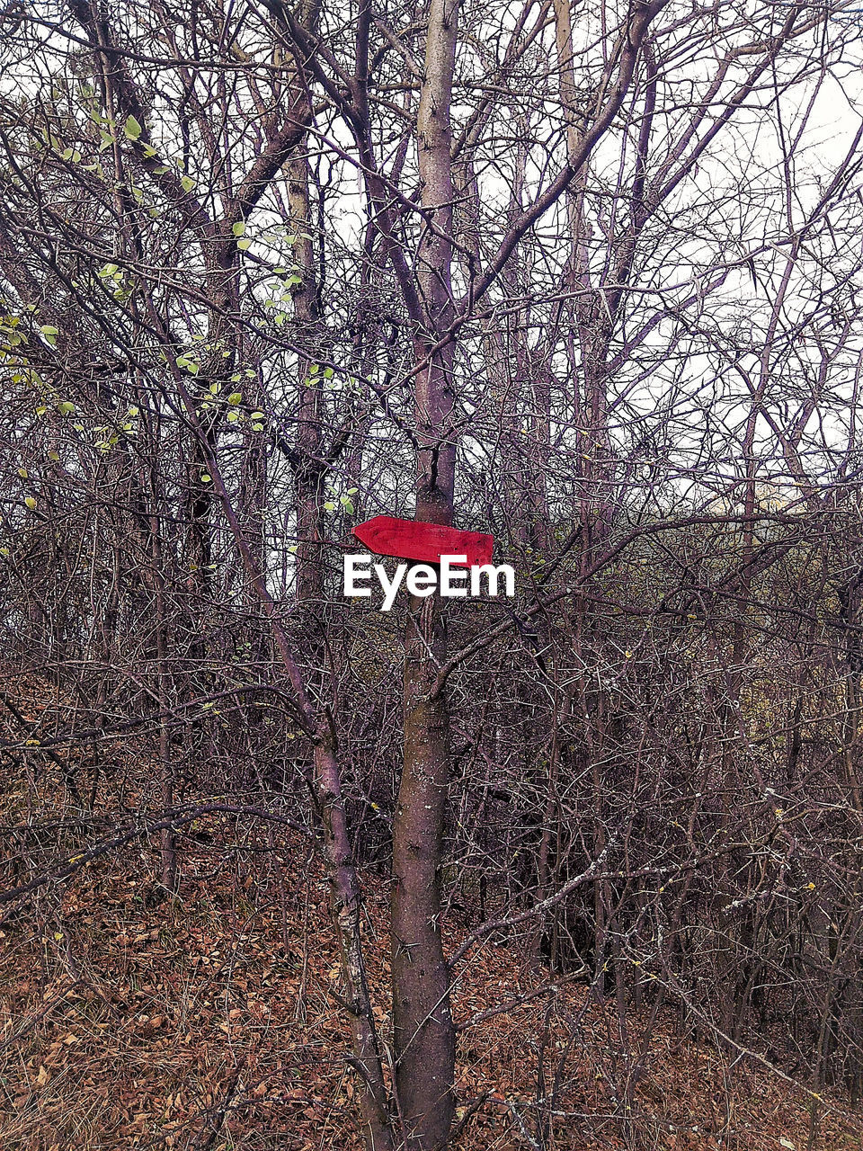 tree, bare tree, red, branch, tree trunk, no people, forest, day, outdoors, nature, growth, beauty in nature, forest fire