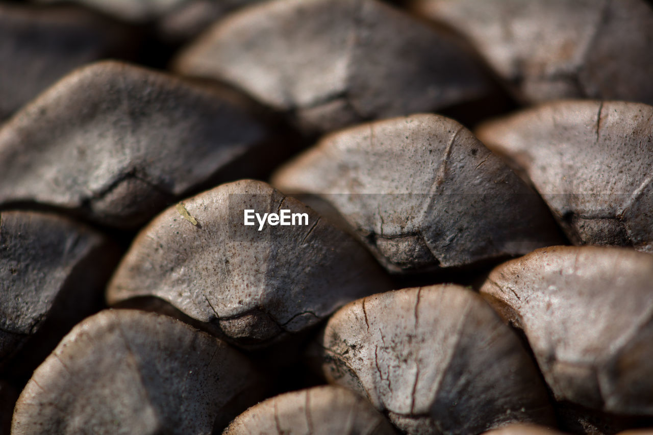 full frame, close-up, backgrounds, stack, no people, large group of objects, log, textured, wood, firewood, wood - material, pattern, abundance, timber, design, shape, repetition, selective focus, nature, heap, woodpile