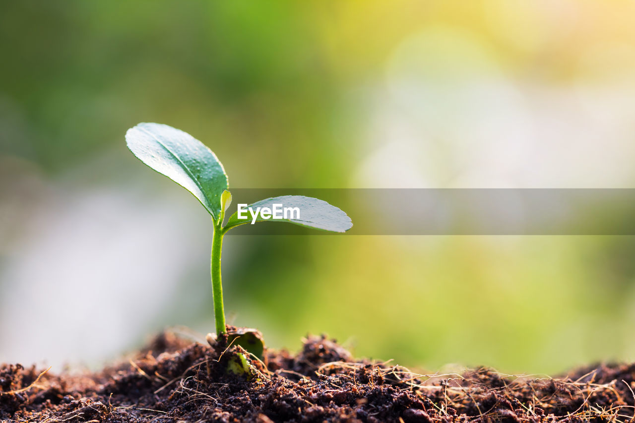 growth, plant, leaf, beginnings, close-up, beauty in nature, plant part, new life, green color, nature, vulnerability, fragility, day, no people, seedling, focus on foreground, selective focus, freshness, sapling, land, outdoors