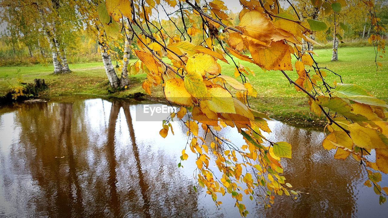 autumn, tree, plant part, leaf, water, change, plant, lake, beauty in nature, reflection, nature, no people, yellow, day, tranquility, growth, branch, outdoors, waterfront, leaves, maple leaf, natural condition, autumn collection, fall