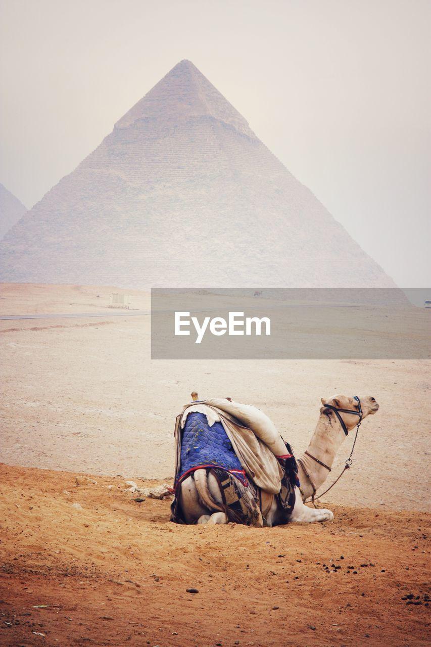 View Of Camel On Desert Against Sky