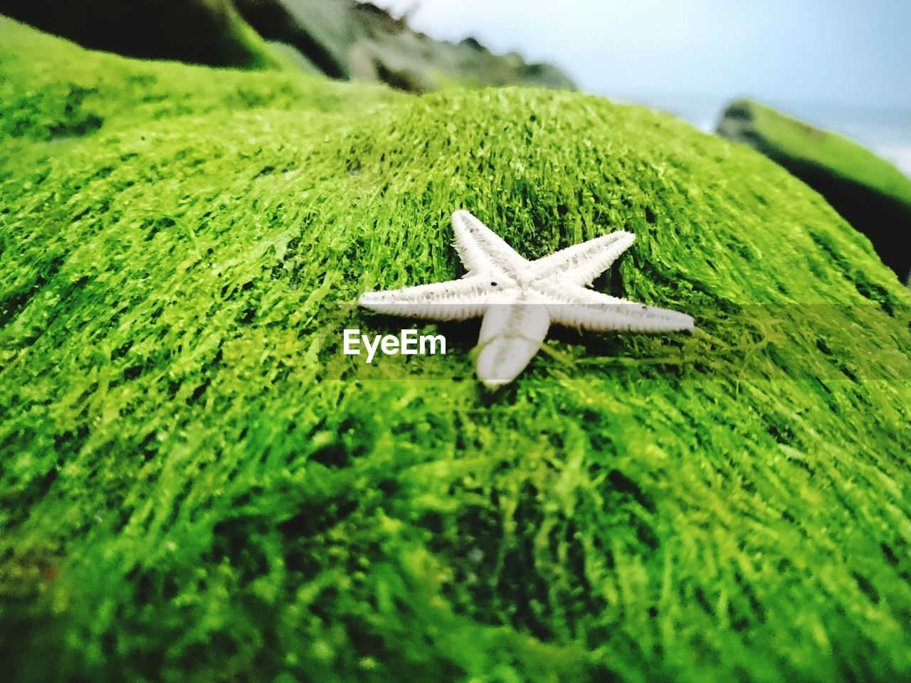 starfish, star shape, one animal, sea life, close-up, green color, nature, day, animal themes, outdoors, no people, animals in the wild, beauty in nature, beach