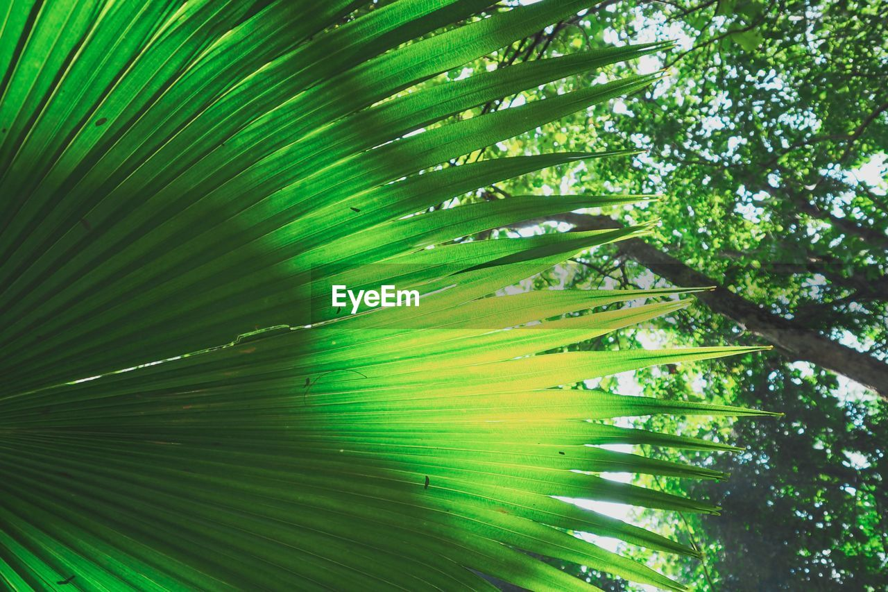 plant, leaf, growth, plant part, green color, beauty in nature, tree, nature, palm tree, no people, palm leaf, tropical climate, freshness, day, backgrounds, outdoors, full frame, close-up, natural pattern, tranquility, leaves