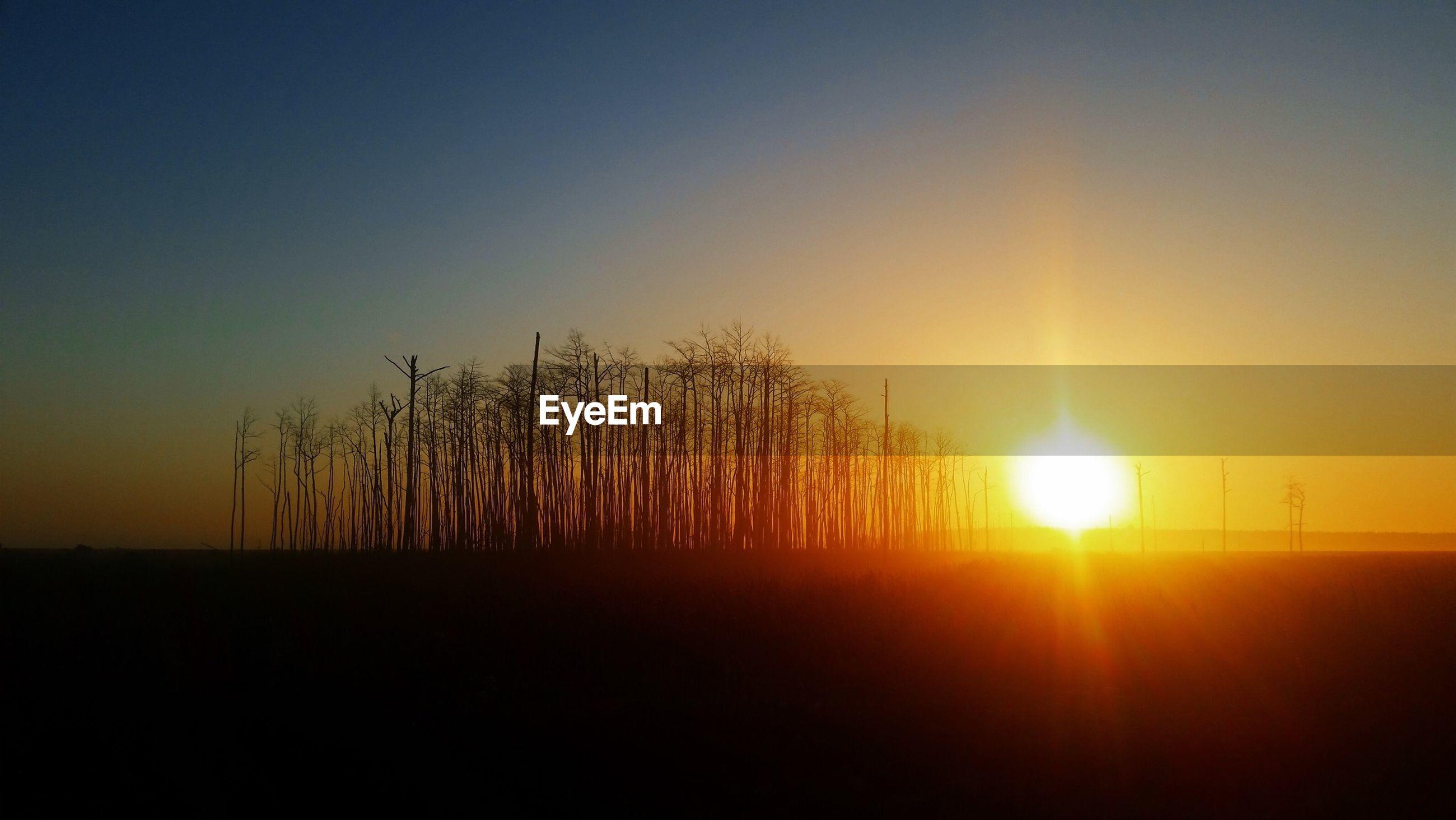 sunset, sun, silhouette, tranquil scene, tranquility, scenics, beauty in nature, orange color, clear sky, copy space, nature, idyllic, sunlight, landscape, tree, field, back lit, sky, dark, sunbeam