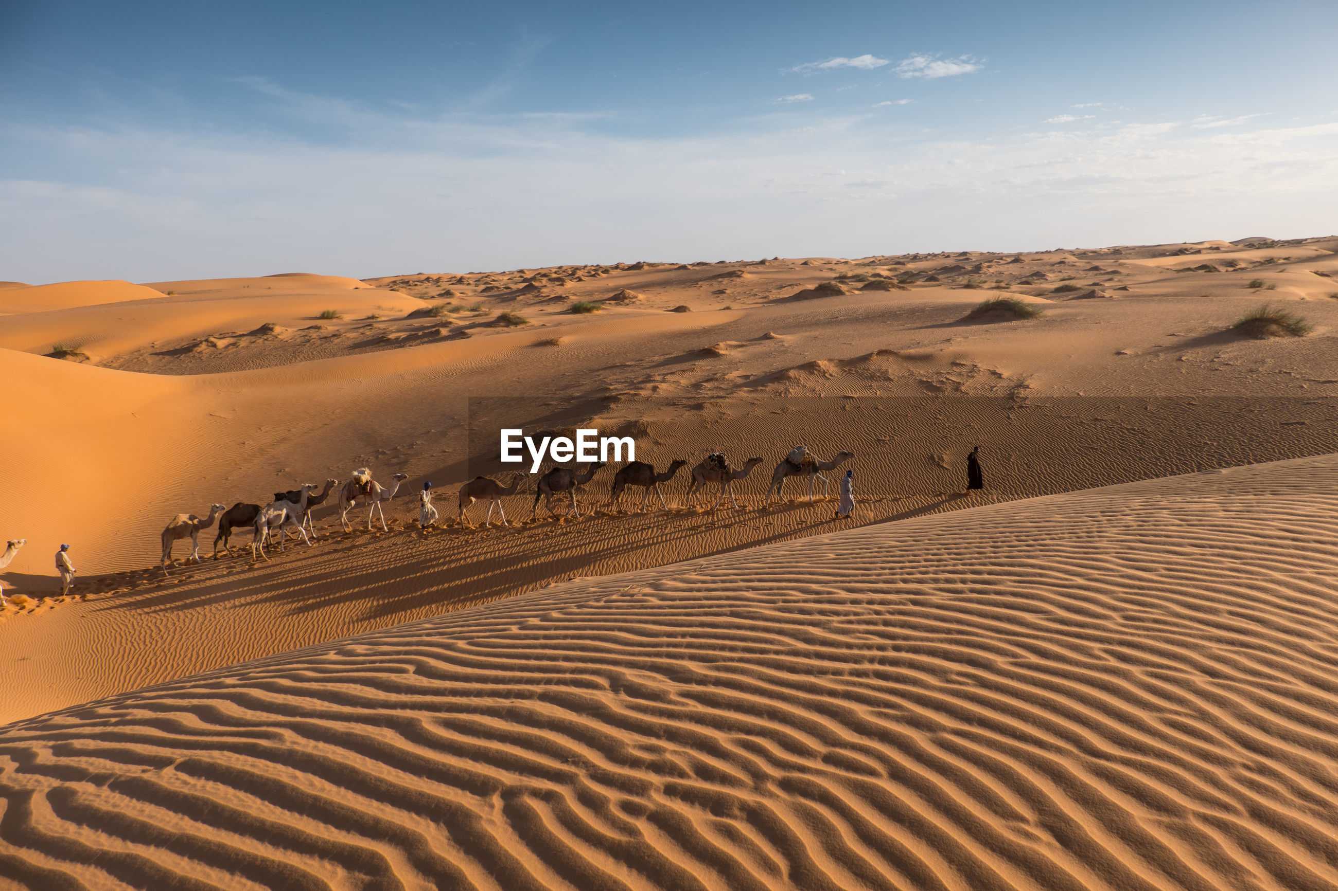 People and camels on sand dunes against sky