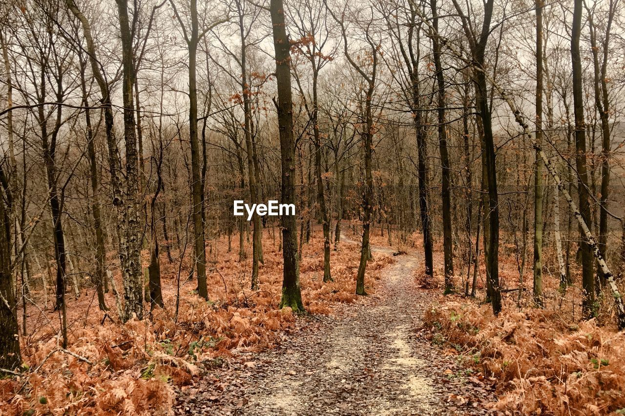 tree, forest, land, plant, tranquility, autumn, no people, nature, direction, the way forward, woodland, non-urban scene, day, bare tree, tranquil scene, change, trunk, tree trunk, scenics - nature, footpath, outdoors