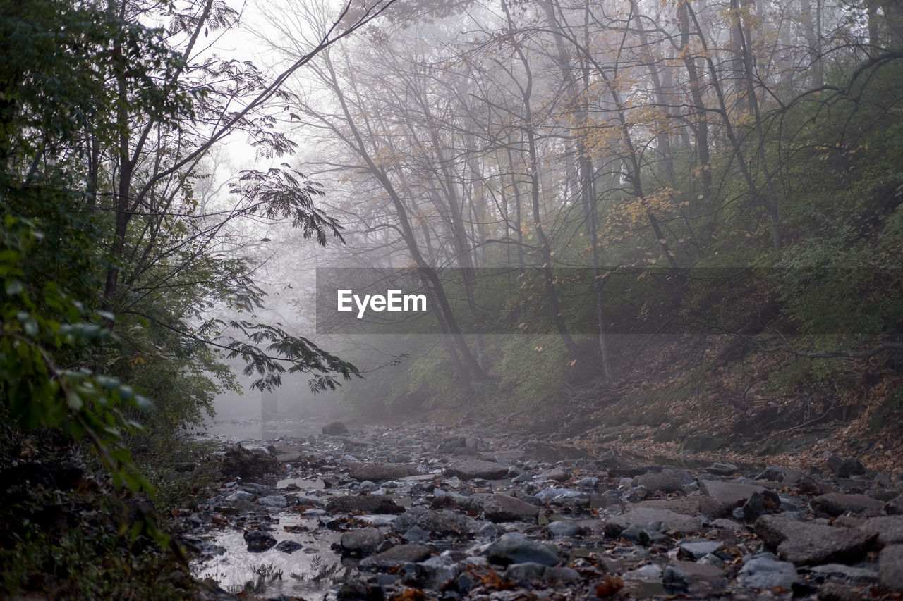 nature, forest, tree, beauty in nature, day, landscape, no people, outdoors, fog, branch, water