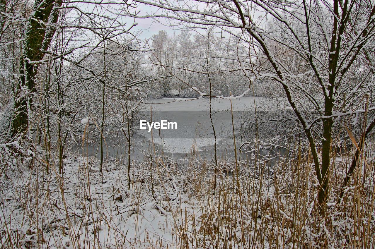 Frozen Lake In Forest
