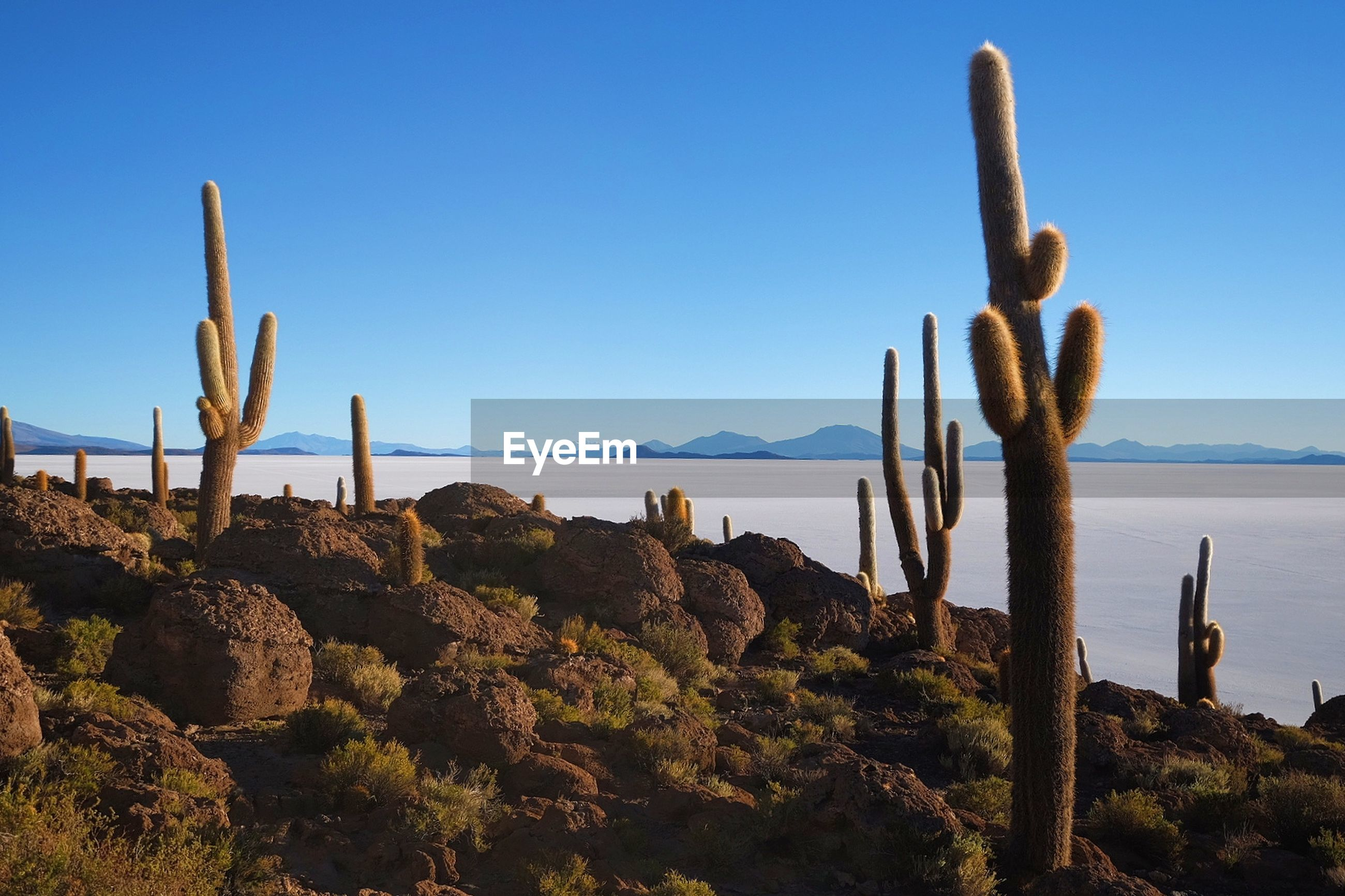 cactus, nature, rock - object, saguaro cactus, beauty in nature, day, scenics, no people, tranquil scene, outdoors, growth, sea, tranquility, blue, plant, sky, water, close-up