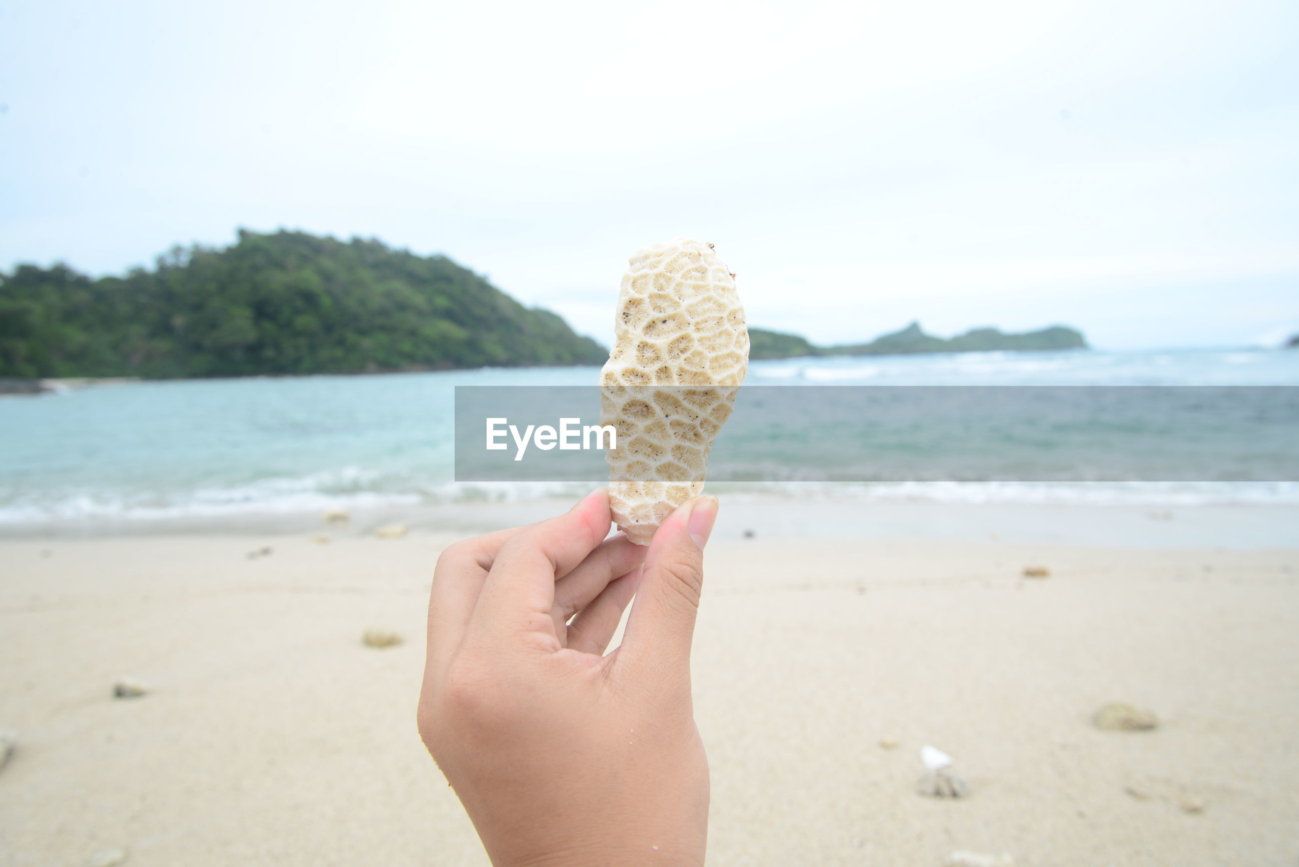 Cropped hand of woman holding coral against sea