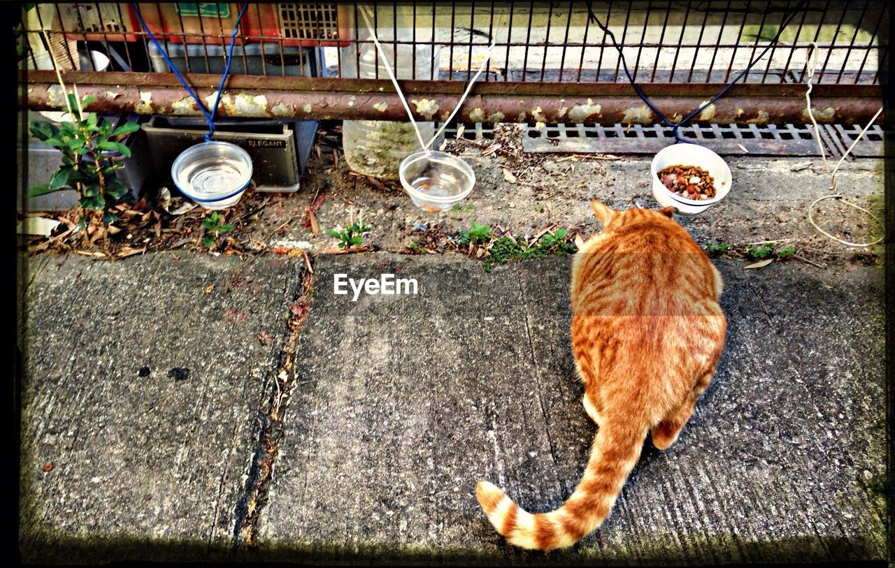 domestic animals, domestic cat, pets, animal themes, mammal, one animal, feline, no people, ginger cat, day, outdoors