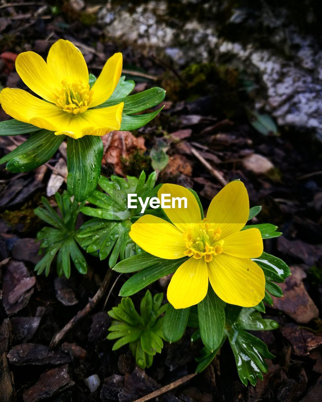 flower, yellow, petal, growth, fragility, nature, flower head, beauty in nature, freshness, plant, blooming, pollen, no people, outdoors, close-up, day, crocus