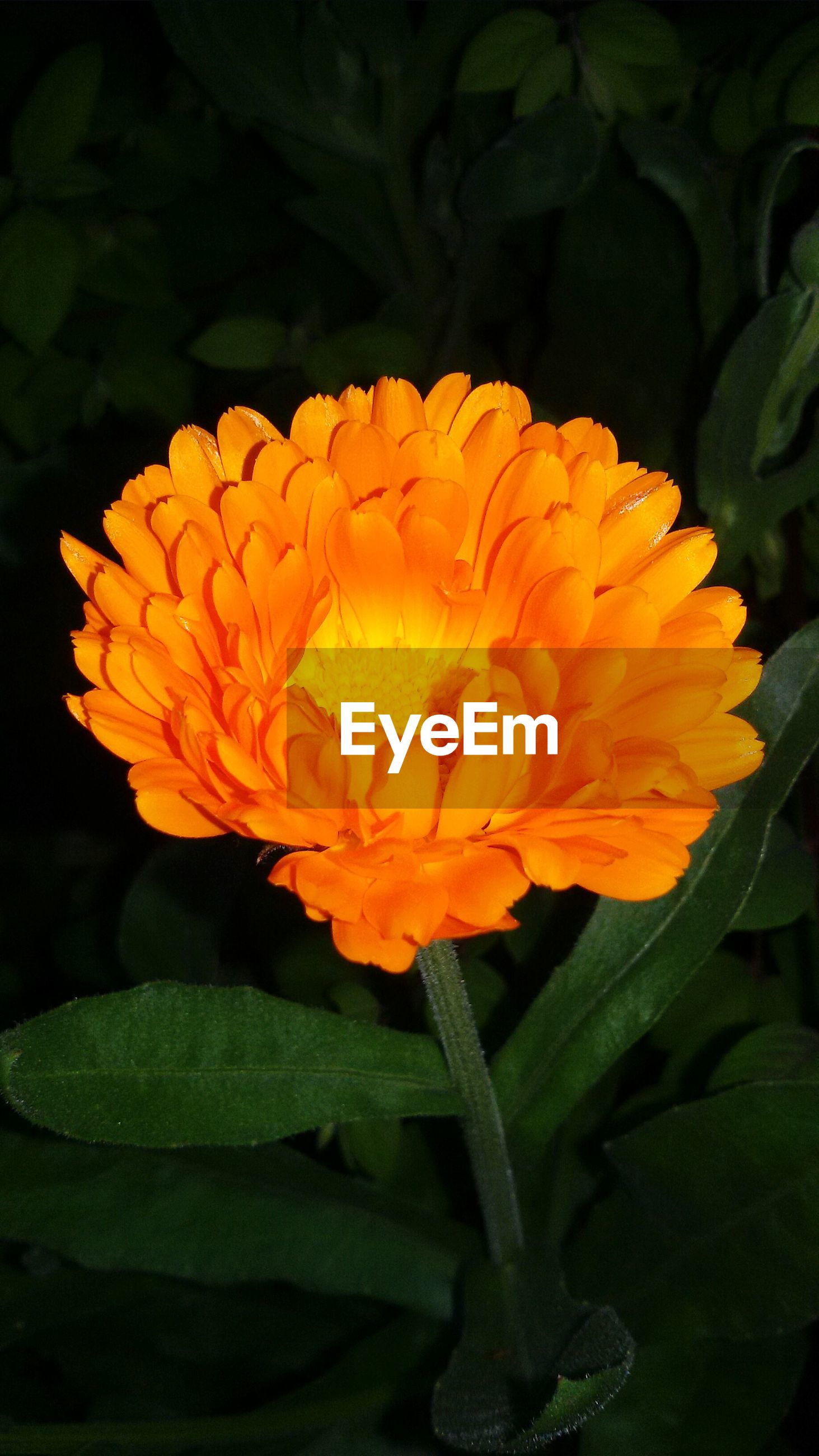 flower, petal, freshness, flower head, fragility, growth, beauty in nature, blooming, nature, orange color, yellow, plant, close-up, single flower, leaf, in bloom, blossom, red, botany, focus on foreground