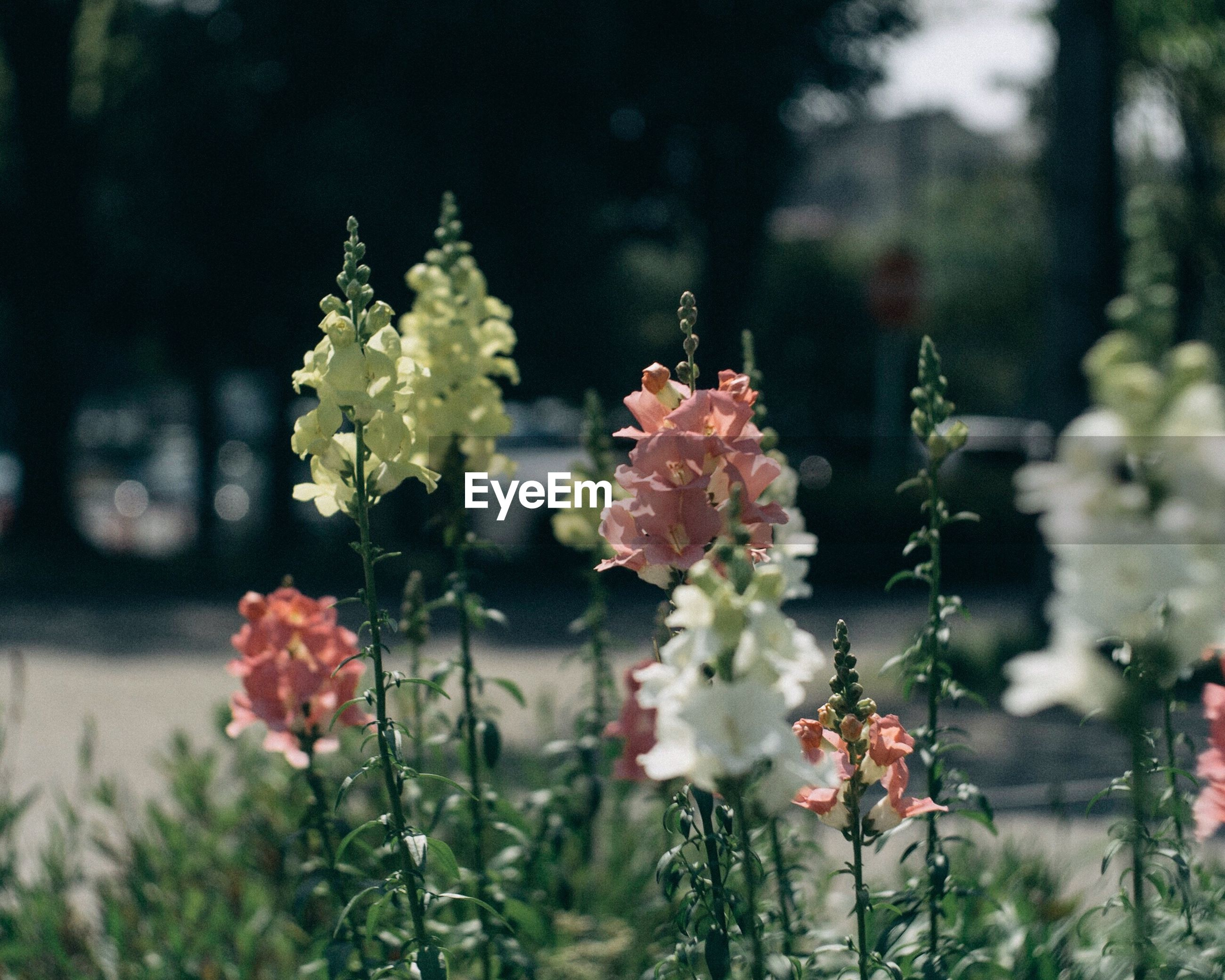 flower, growth, beauty in nature, nature, plant, fragility, no people, focus on foreground, day, outdoors, petal, freshness, blooming, tree, close-up, flower head