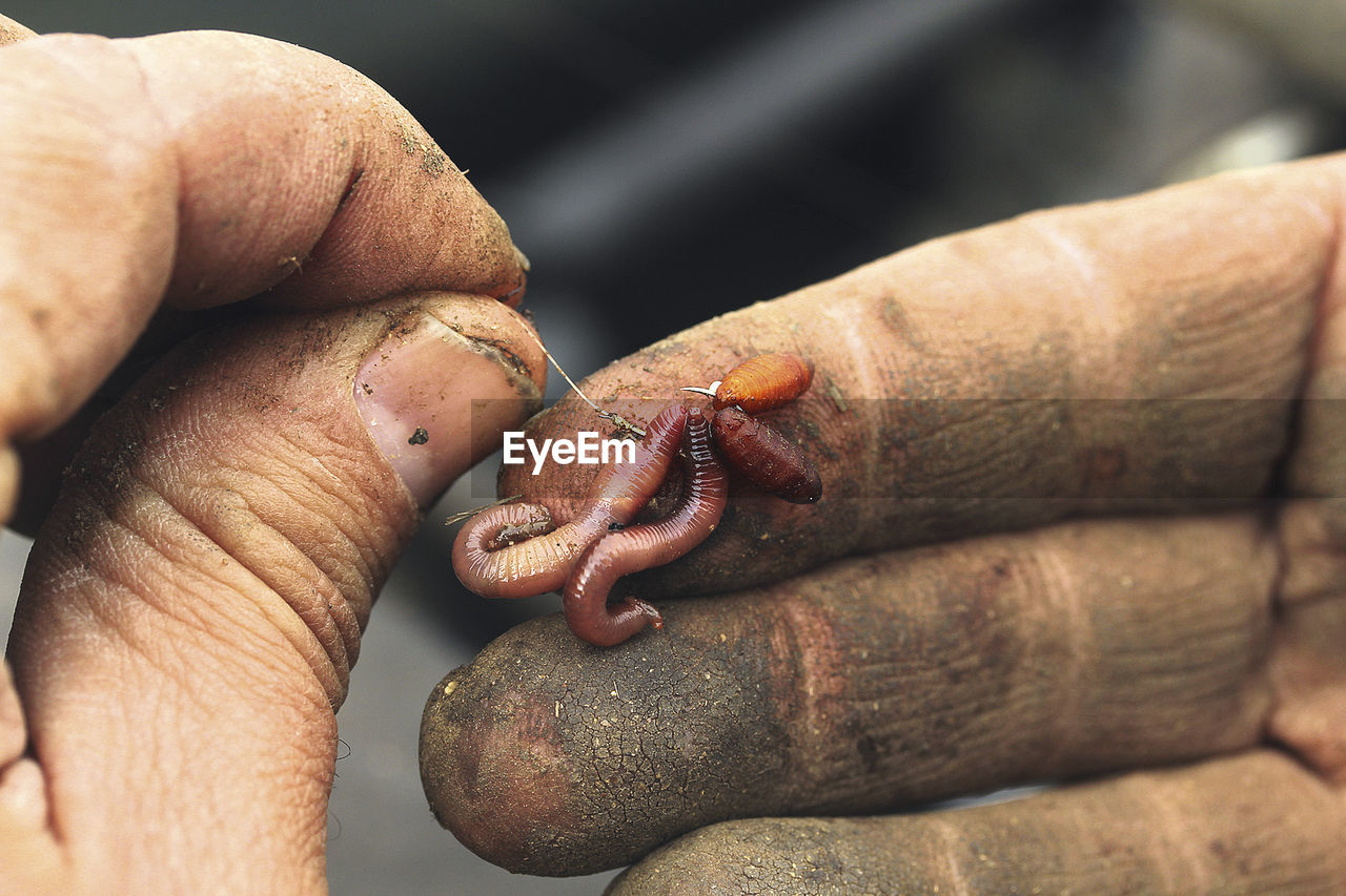 Human hand holding worms