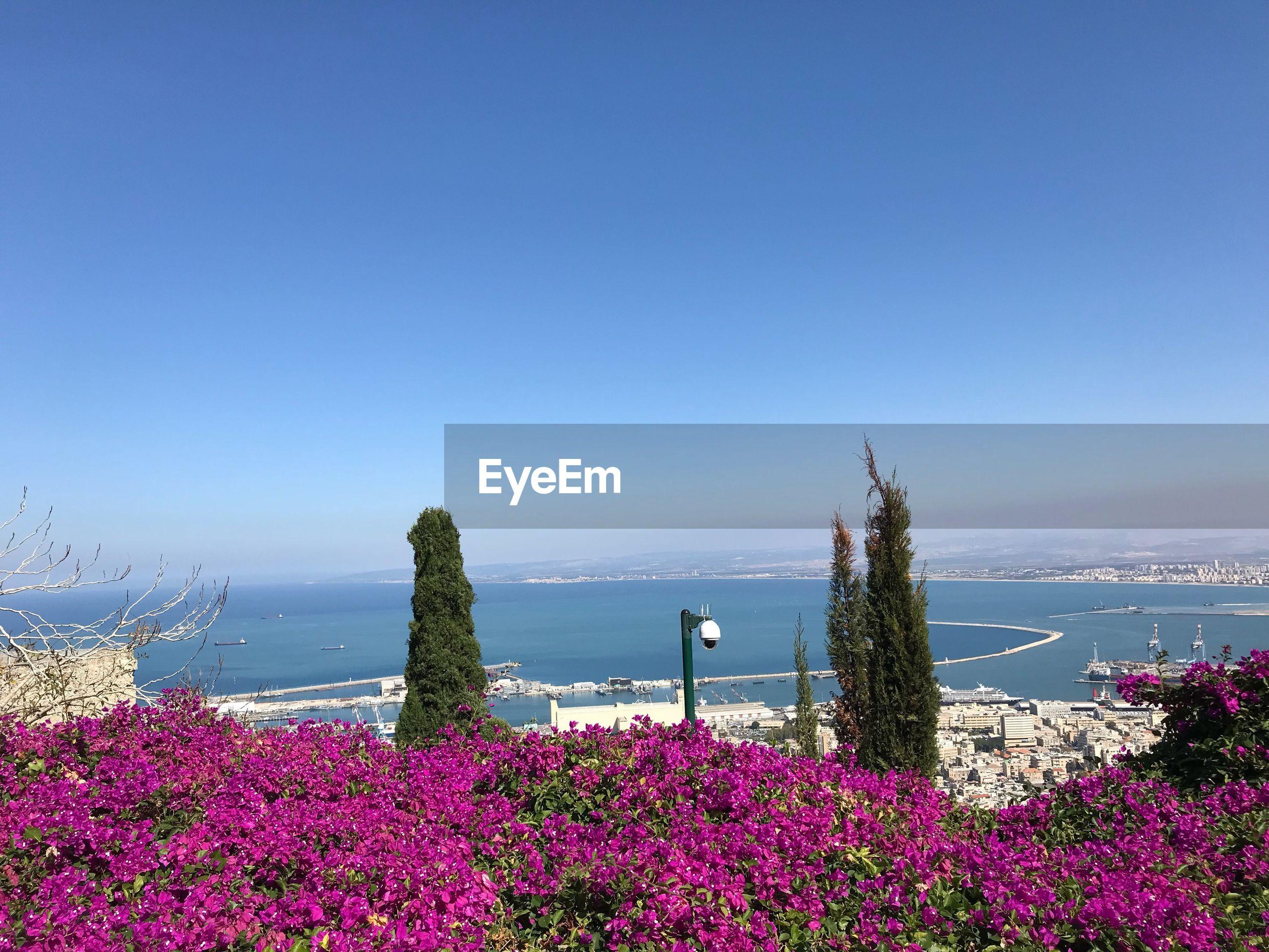 FLOWERING PLANTS BY SEA AGAINST BLUE SKY