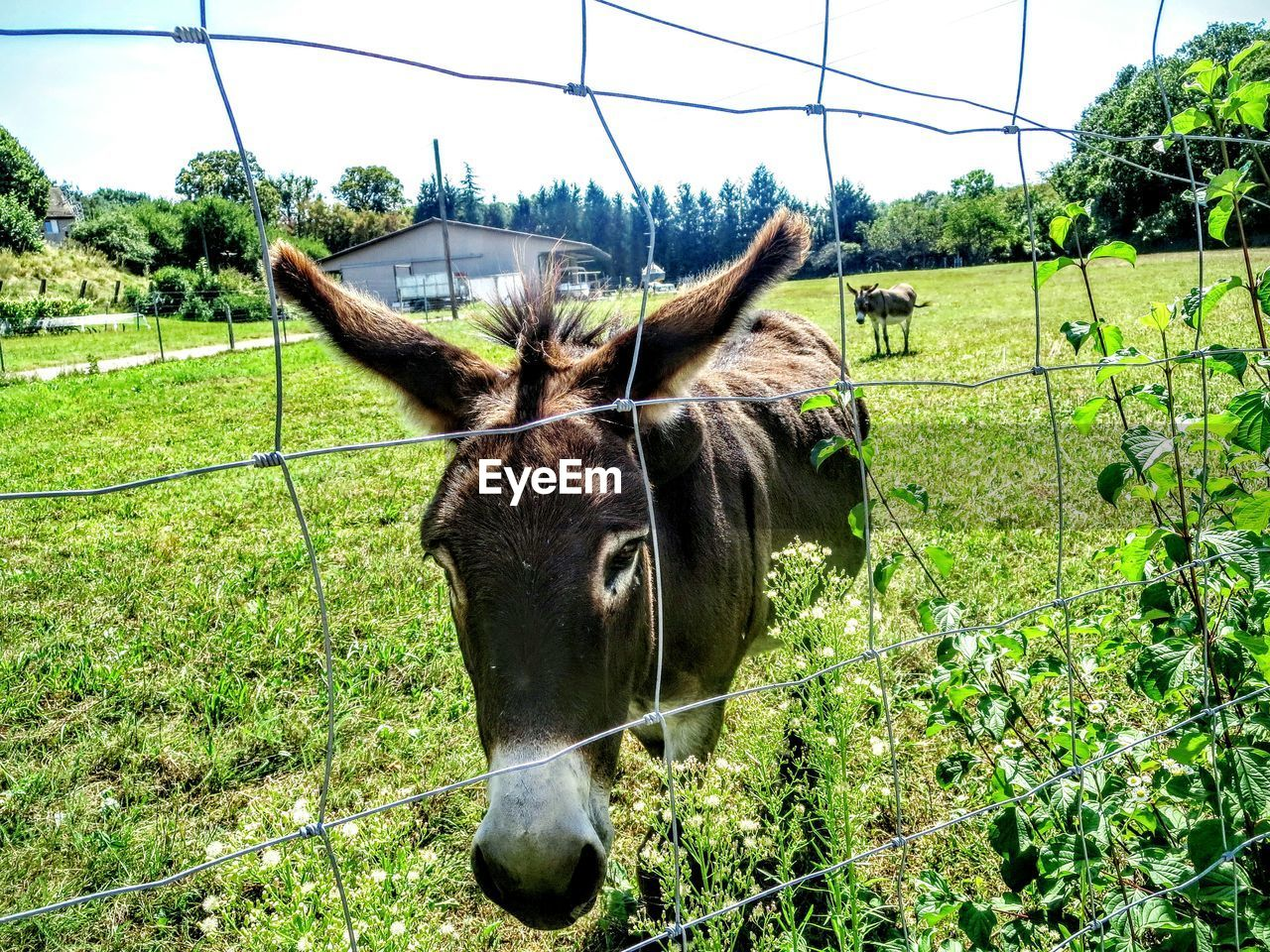 animal themes, domestic animals, mammal, one animal, horse, livestock, field, day, green color, grass, no people, nature, outdoors, growth, grazing, plant, paddock, standing, tree, portrait, beauty in nature, sky, close-up