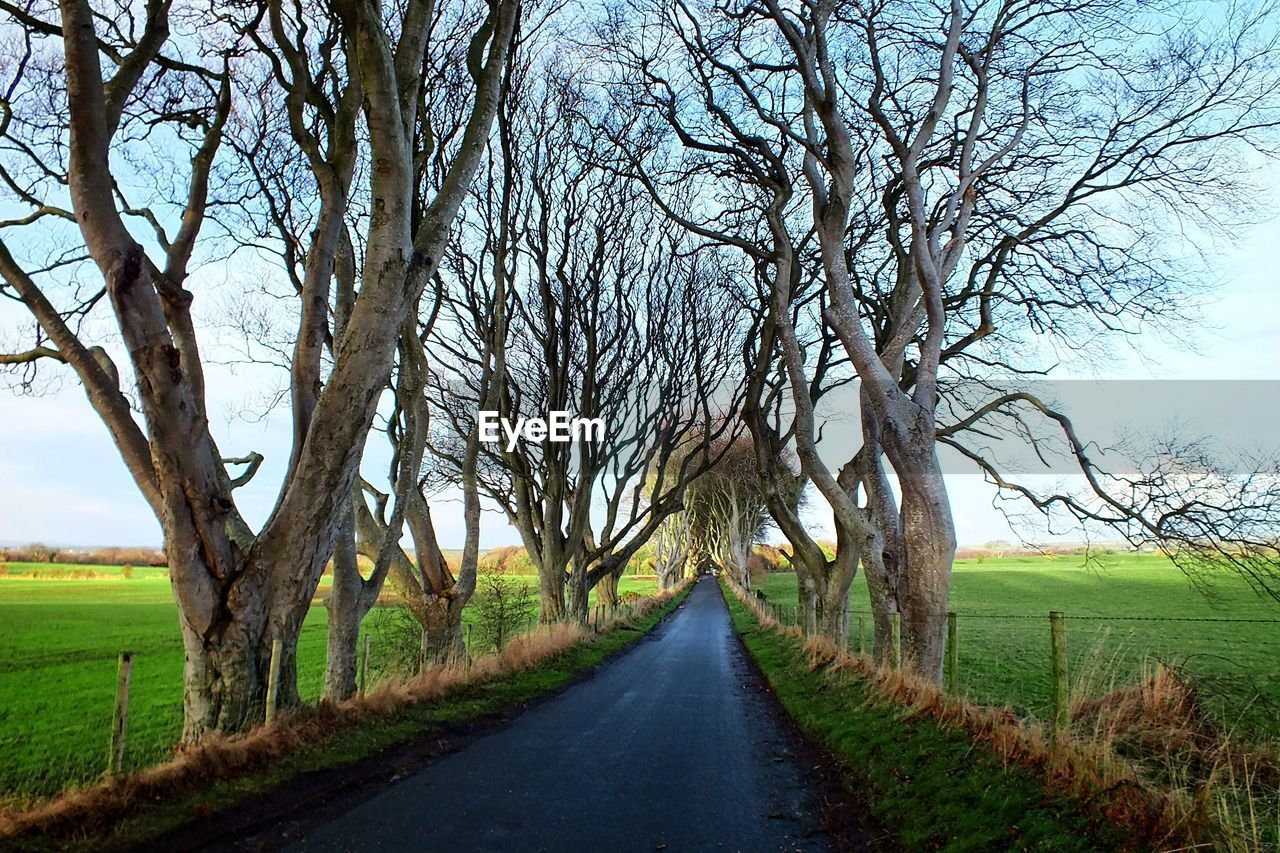 Street amidst bare trees and field