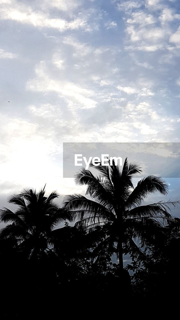 palm tree, tree, low angle view, sky, silhouette, cloud - sky, palm frond, tree trunk, no people, outdoors, growth, day, tranquility, nature, beauty in nature, scenics