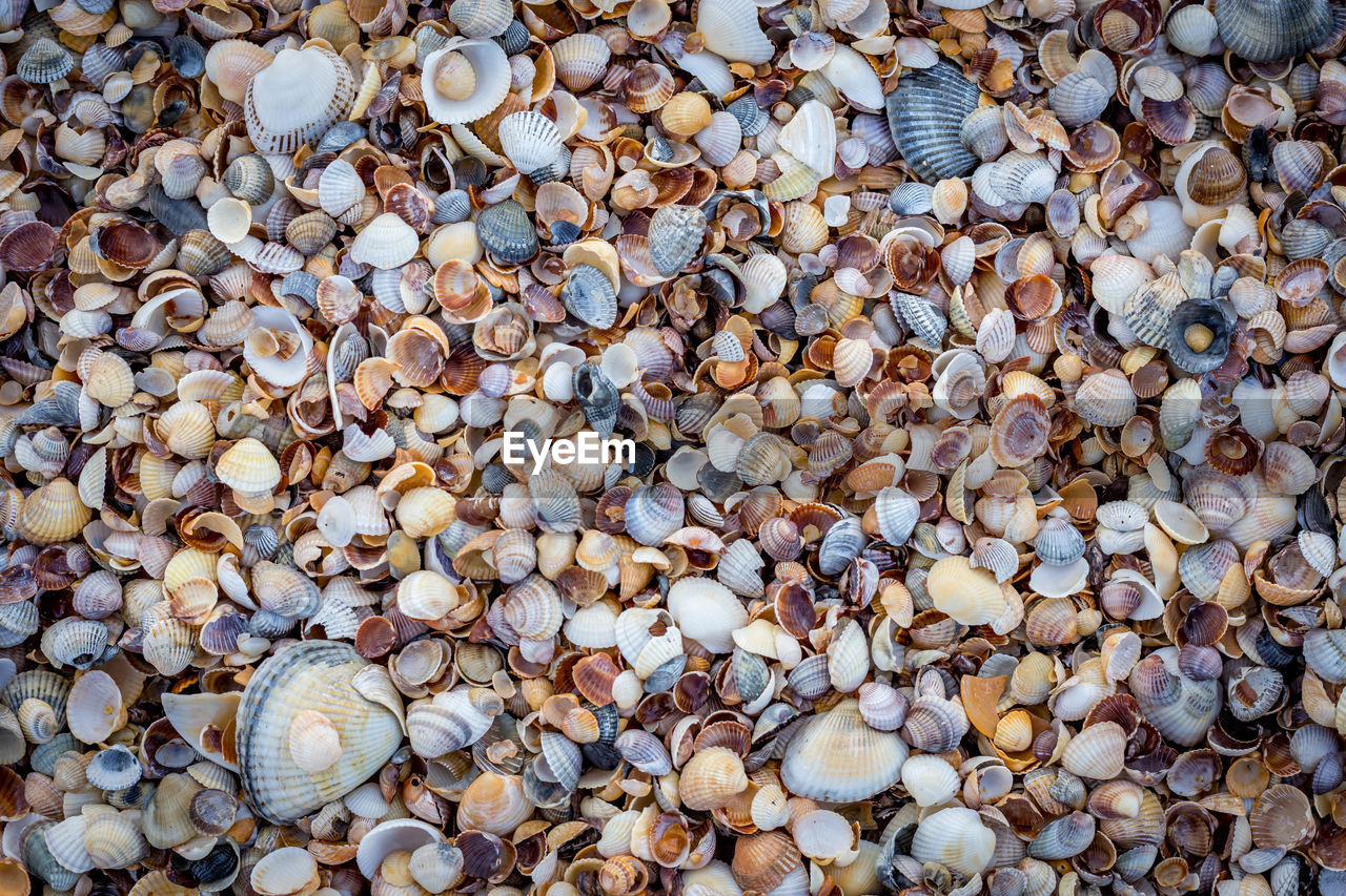 full frame, large group of objects, abundance, backgrounds, shell, no people, seashell, day, beach, nature, high angle view, variation, animal wildlife, close-up, still life, rock, choice, textured, detail, land, pebble