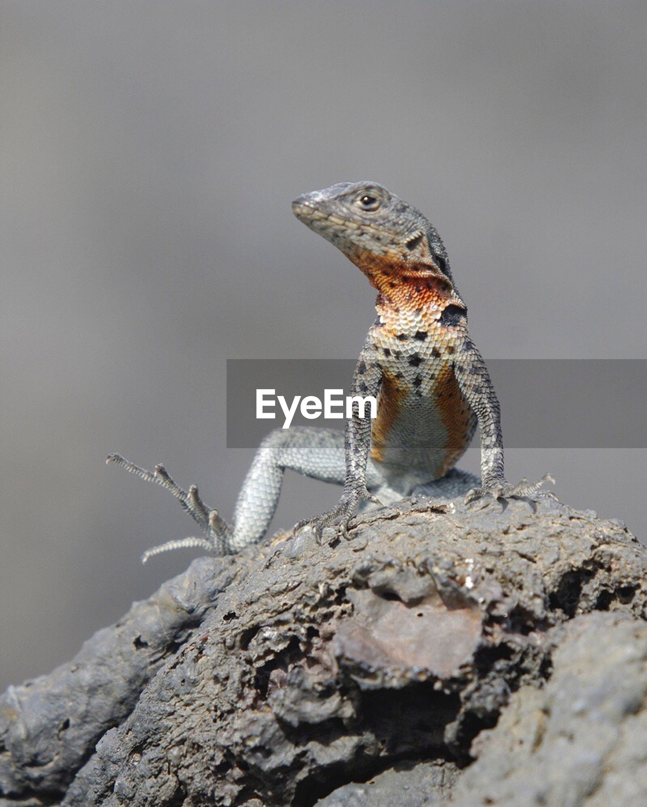 one animal, animals in the wild, animal themes, animal wildlife, reptile, no people, day, nature, close-up, outdoors, perching