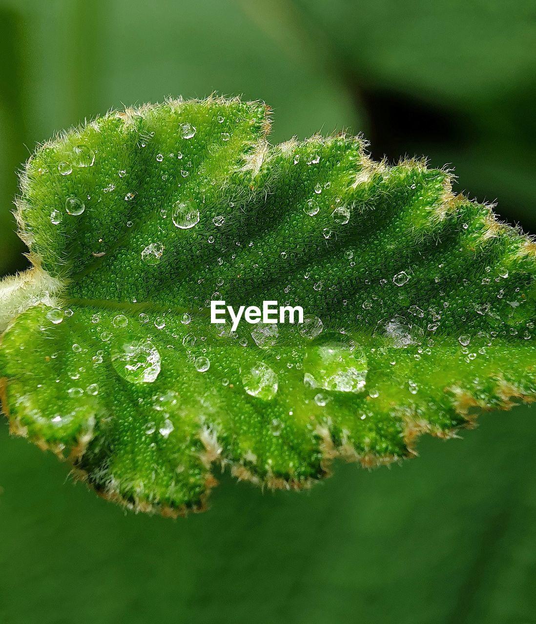 Close-up of wet plant leaf