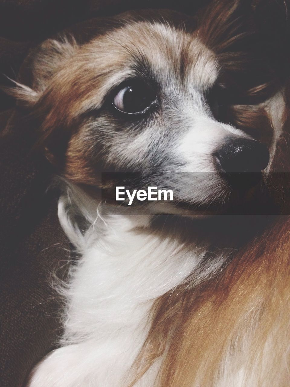 pets, domestic animals, one animal, animal themes, dog, mammal, close-up, indoors, no people, portrait, day