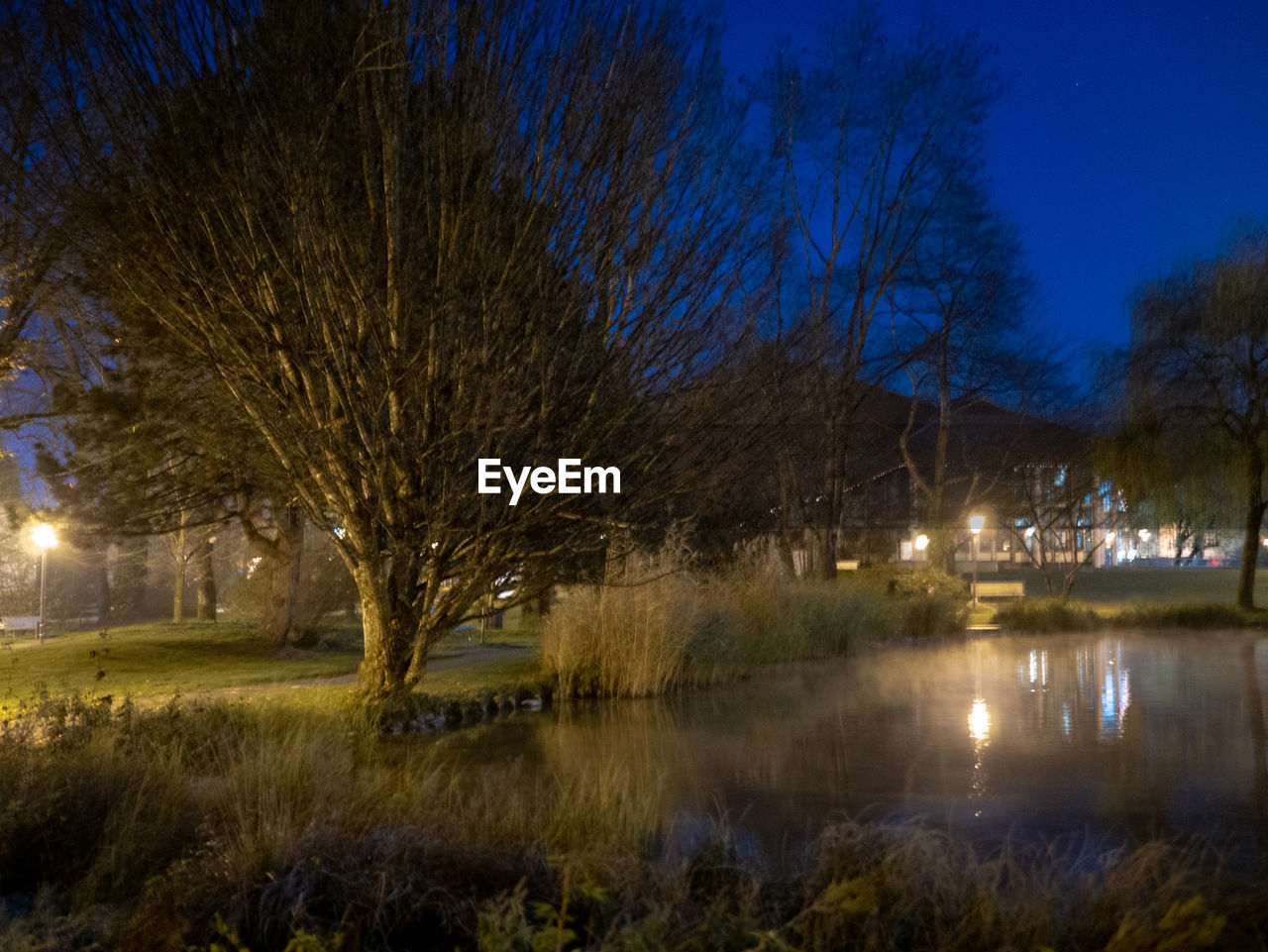 tree, plant, water, illuminated, night, nature, reflection, lake, sky, no people, bare tree, grass, scenics - nature, tranquility, architecture, outdoors, tranquil scene, beauty in nature, building exterior