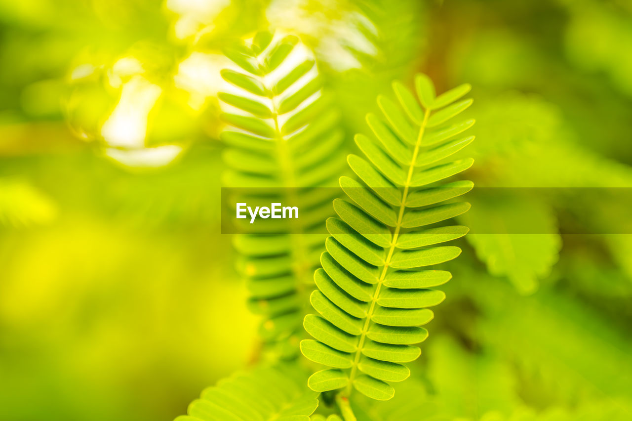green color, plant, growth, close-up, focus on foreground, nature, leaf, beauty in nature, plant part, fern, no people, selective focus, day, freshness, outdoors, tree, tranquility, pattern, natural pattern, botany