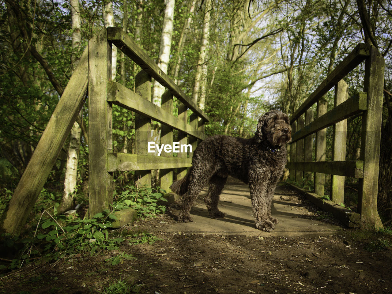tree, one animal, mammal, forest, plant, land, canine, dog, nature, day, pets, domestic, woodland, domestic animals, full length, outdoors, people