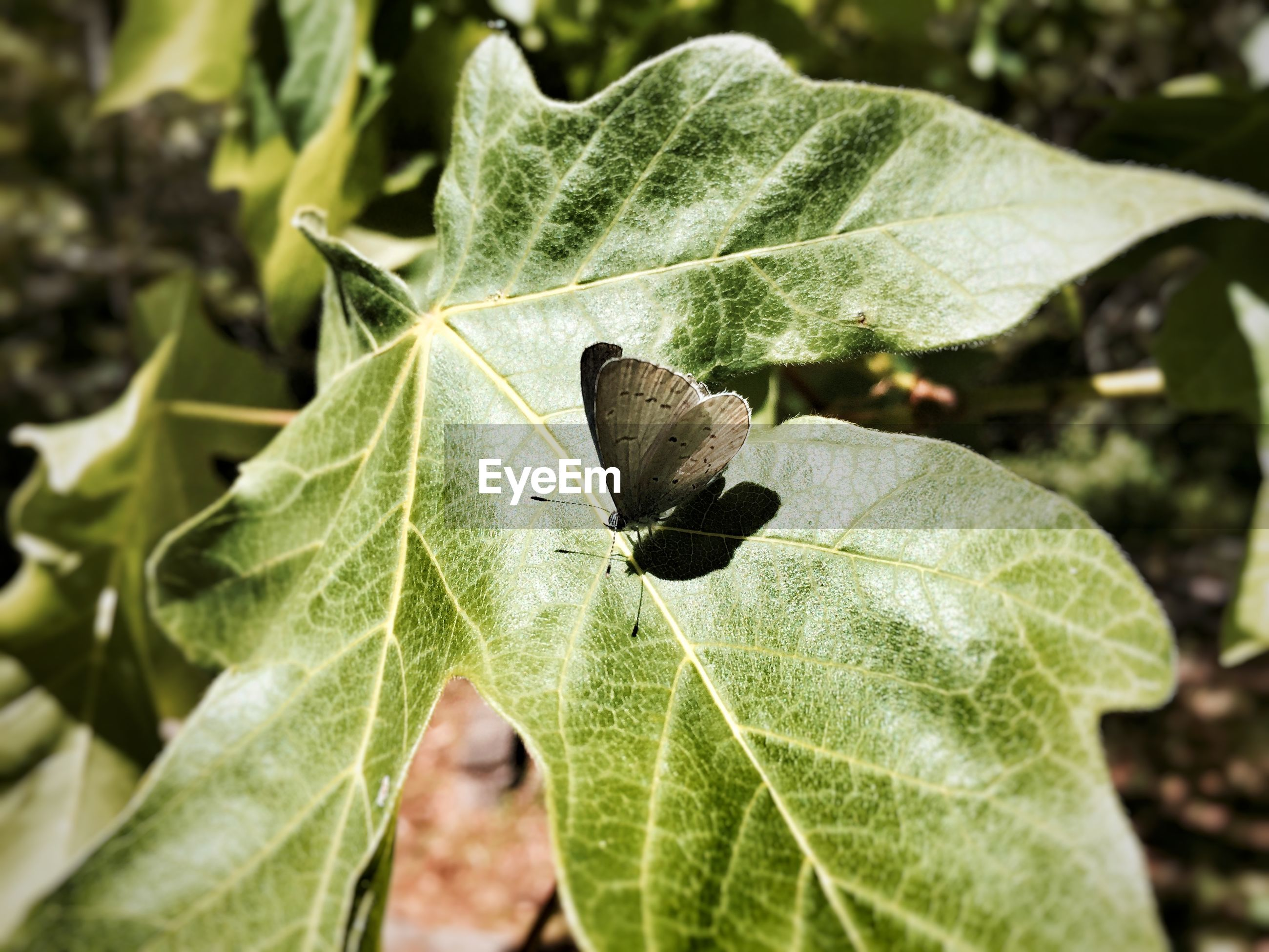 Close-up view of butterfly siting on green leaf