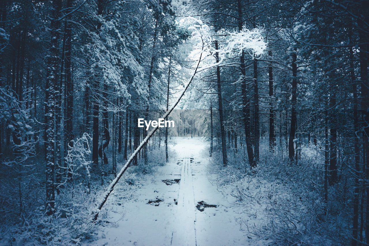 snow, winter, cold temperature, forest, tree, nature, outdoors, woodland, frozen, snowing, no people, tranquility, scenics, bare tree, landscape, beauty in nature, day, sky