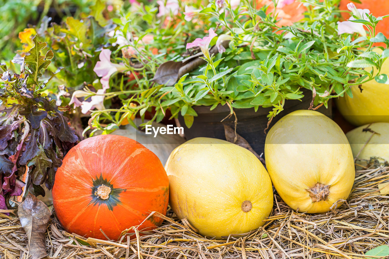 food and drink, food, pumpkin, vegetable, wellbeing, freshness, plant, healthy eating, no people, day, close-up, fruit, nature, outdoors, growth, green color, orange color, leaf, organic, high angle view