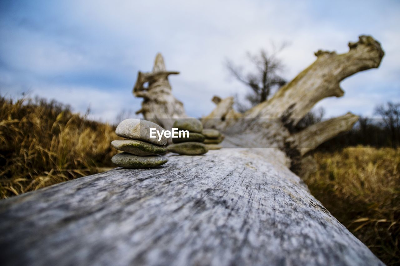 selective focus, wood - material, outdoors, no people, nature, close-up, day, sky, tree