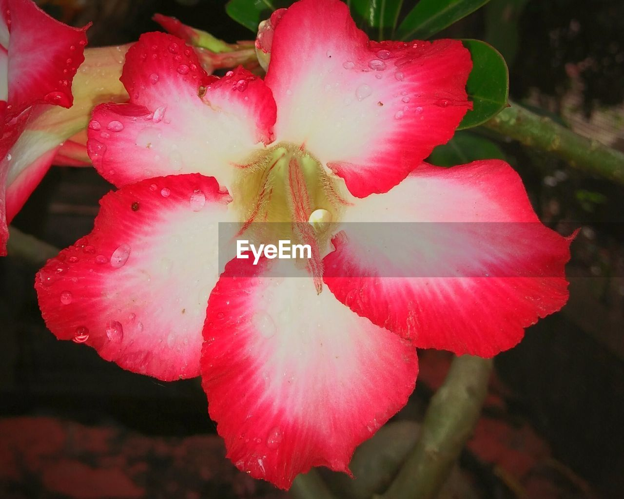 flower, petal, fragility, beauty in nature, growth, flower head, nature, freshness, pink color, outdoors, close-up, stamen, red, no people, day, wet, drop, plant, springtime, water, blooming, day lily