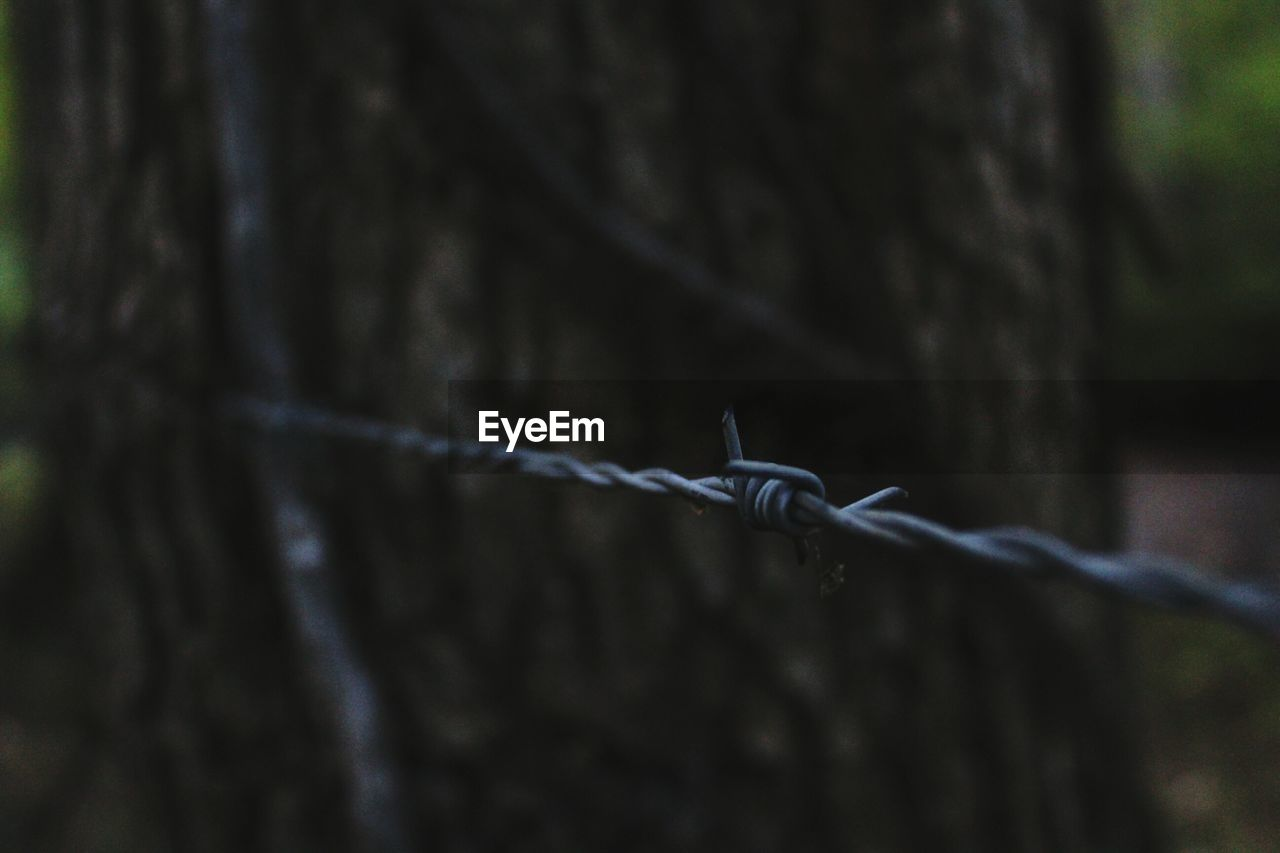 barbed wire, protection, security, safety, metal, focus on foreground, outdoors, close-up, day, no people, nature, sky