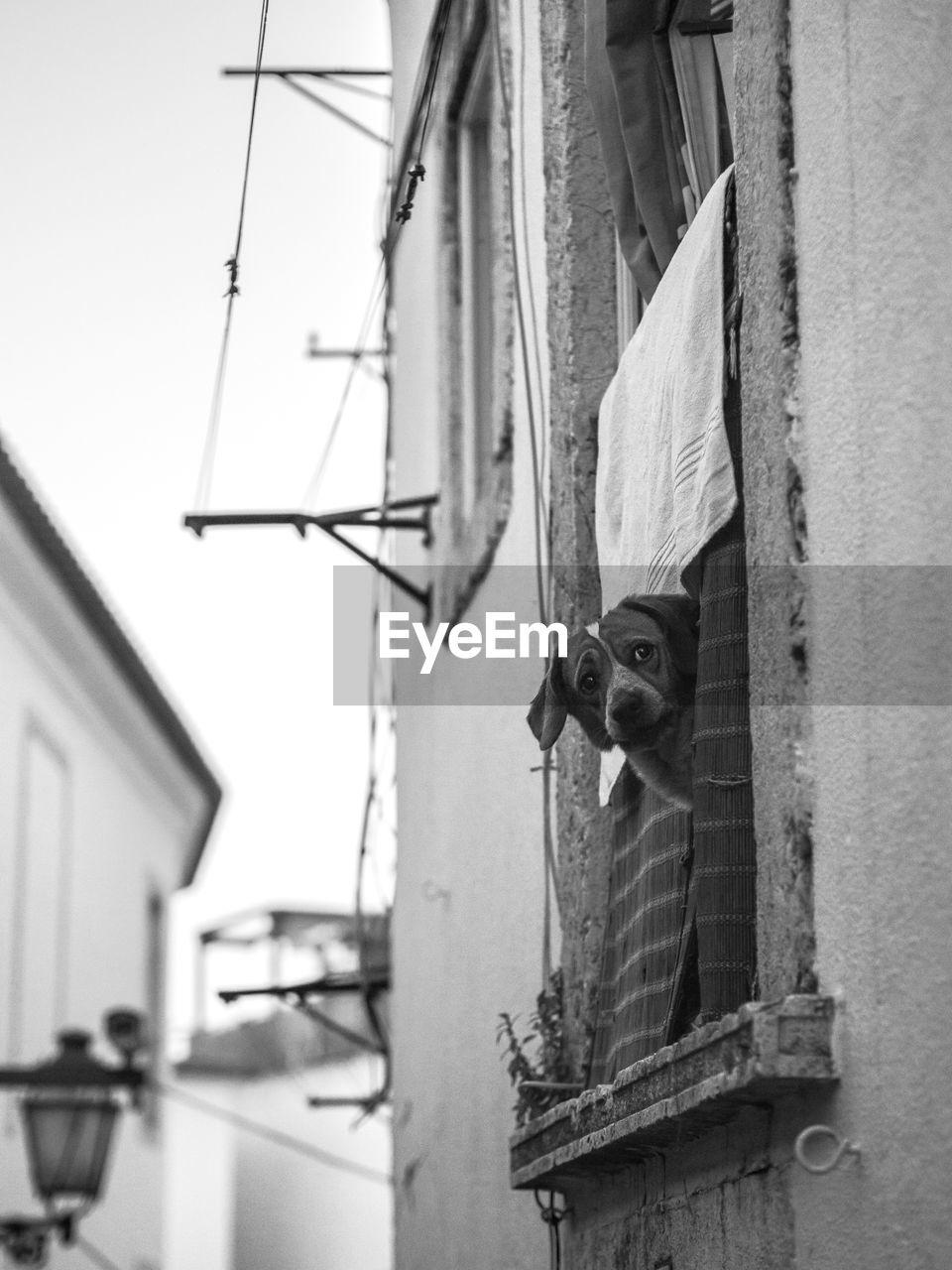Portrait of cat on building window