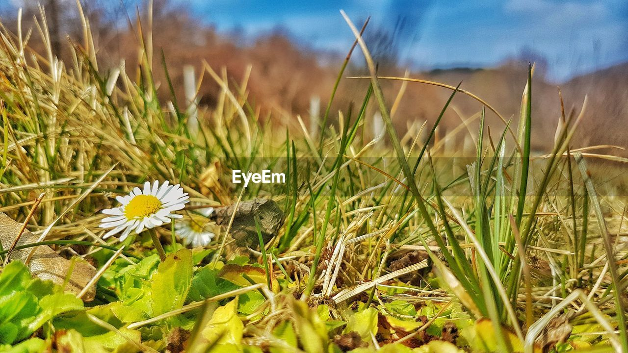 nature, flower, one animal, growth, insect, animal themes, plant, grass, day, beauty in nature, no people, fragility, field, close-up, outdoors, animals in the wild, flower head, freshness