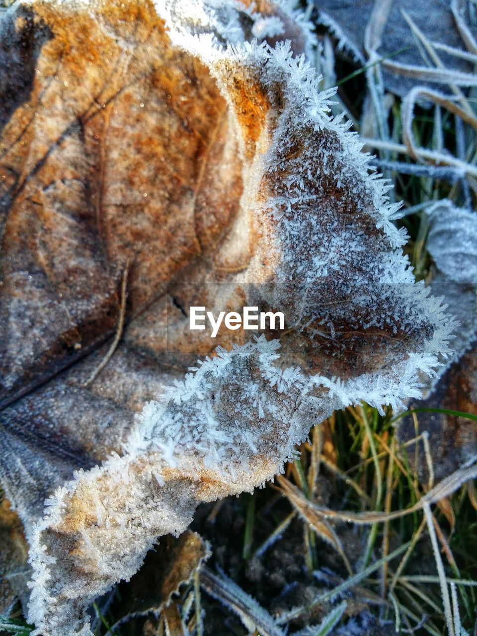 cold temperature, winter, snow, nature, close-up, weather, outdoors, day, focus on foreground, frozen, frost, leaf, no people, forest, fungus, plant, beauty in nature, fragility